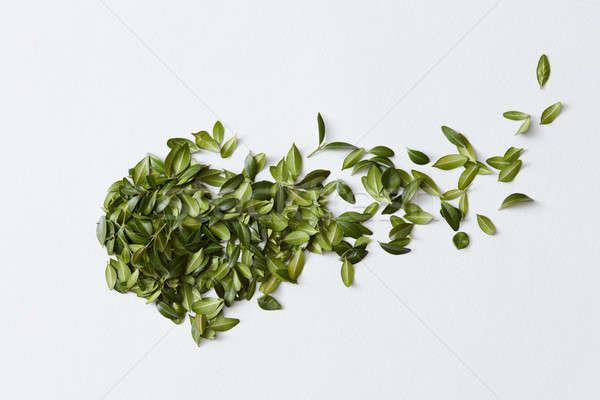 зеленые листья белый форме комета весны природы Сток-фото © artjazz