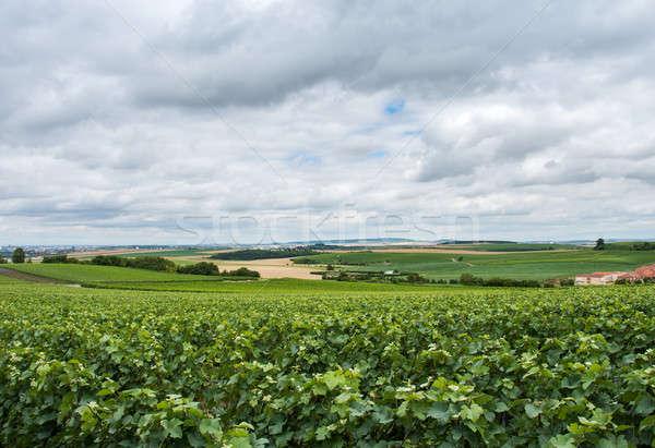 Winnicy krajobraz Francja niebo żywności drogowego Zdjęcia stock © artjazz