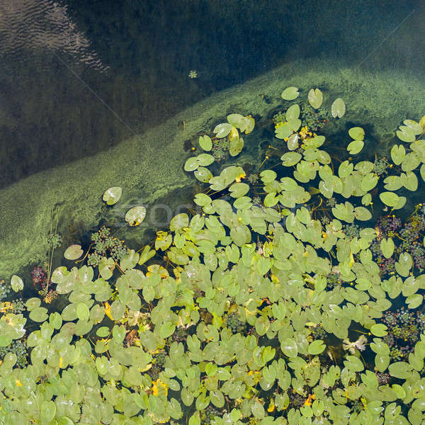 Aerial view of pond with yellow waterlily flowers, green leaf, duckweed in a summer day. Photo from  Stock photo © artjazz