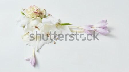Stok fotoğraf: çiçekler · çerçeve · beyaz · güzel · bahar