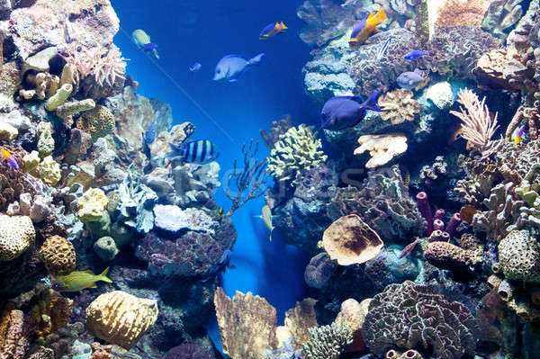 underwater world with corals and tropical fish. Stock photo © artjazz