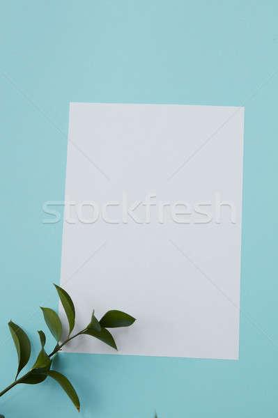 Zielone gałązka kopia przestrzeń górę widoku biały Zdjęcia stock © artjazz