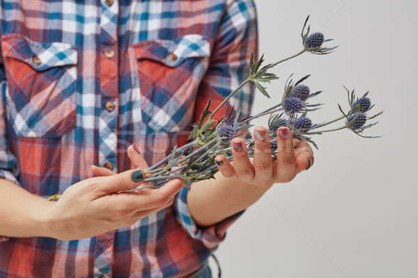 Hands of a girl holding blue flowers eryngium Stock photo © artjazz
