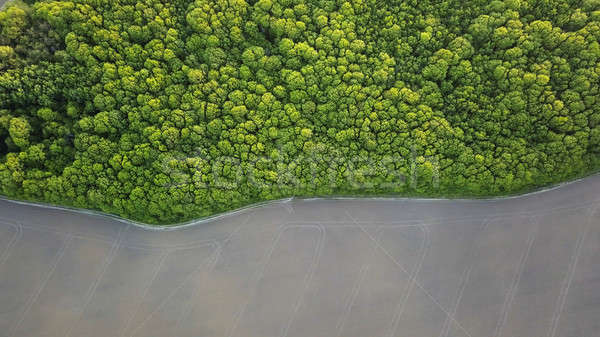 Aerial view a spring green forest and an asphalt road. Photo from the drone Stock photo © artjazz