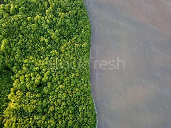 Aves olho ver floresta verde Foto stock © artjazz