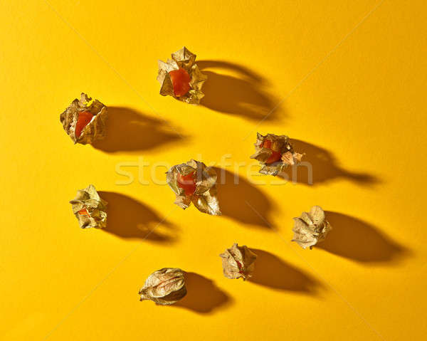 Flat lay view on a pattern with yellow physalis fruit with shadows on a yellow background Stock photo © artjazz