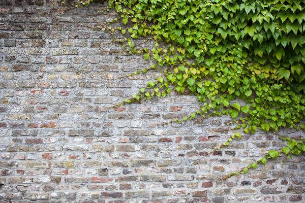 古い レンガの壁 緑 ツタ 葉 家 ストックフォト © artjazz