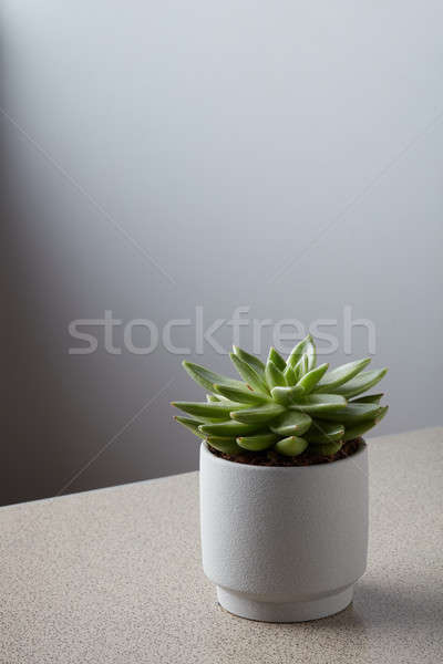 Pot succulent gris marbre table blanche Photo stock © artjazz