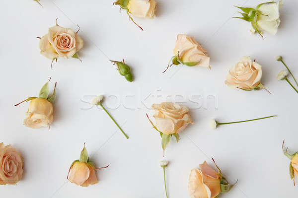 Assorted roses heads. Stock photo © artjazz