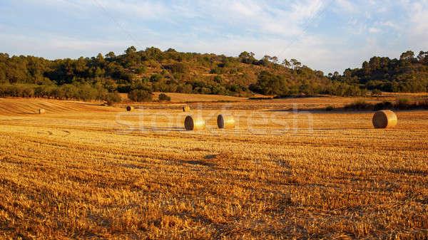 Boglya széna mező aratás szalmaszál mezők Stock fotó © artjazz