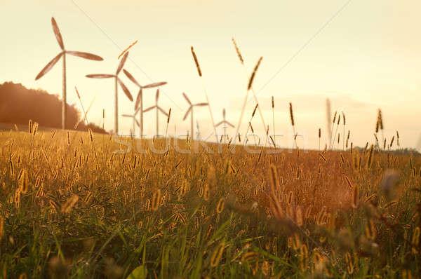 ветер генератор закат небе дерево солнце Сток-фото © artjazz