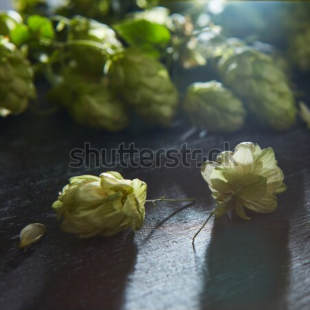 Fresh green hops on a wooden table Stock photo © artjazz