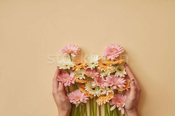 A bouquet of colorful gerberas girl holds in hands on a yellow paper background. Stock photo © artjazz