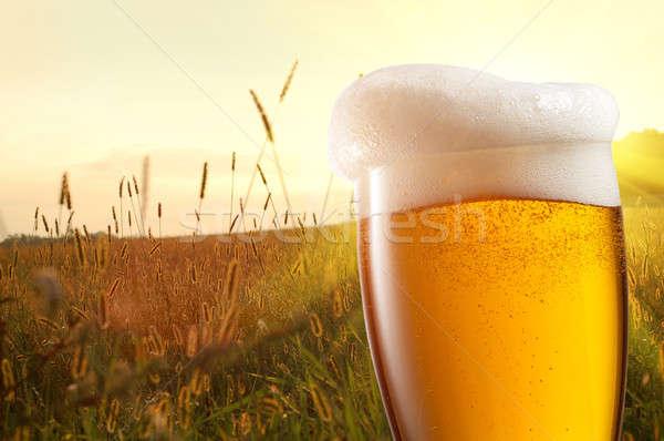 üveg sör búzamező naplemente nyár mező Stock fotó © artjazz