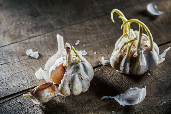 sprouting garlic on wooden table Stock photo © artjazz