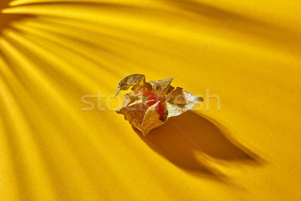 Close up view of yellow ripe, juicy physalis single fruit with striped shadows on a yellow backgroun Stock photo © artjazz