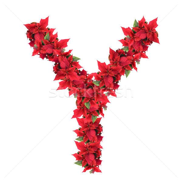 Mektup kırmızı Noel çiçekler yalıtılmış beyaz Stok fotoğraf © artjazz