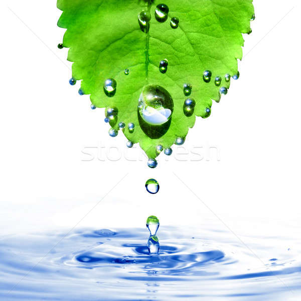 green leaf with water drops and splash isolated on white Stock photo © artjazz