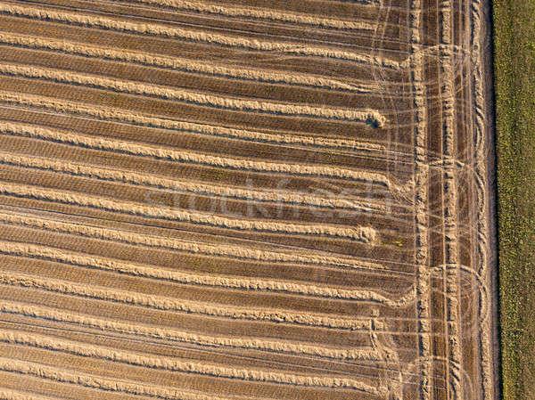 Campo cosecha paja agrícola Foto stock © artjazz
