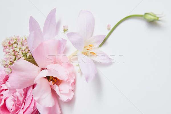 frame pink roses Stock photo © artjazz