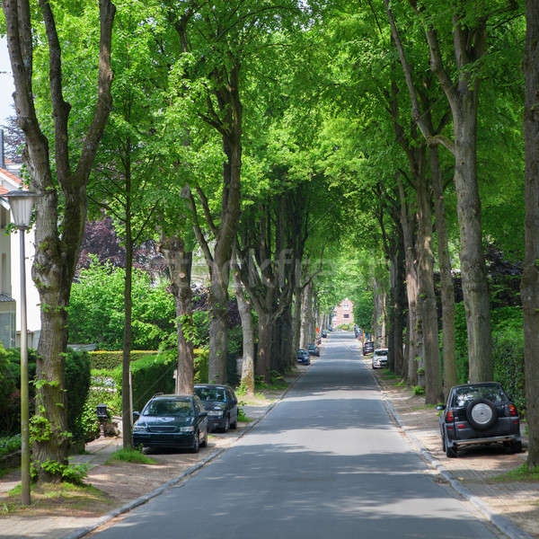 Road in a town with line or row of trees Stock photo © artjazz