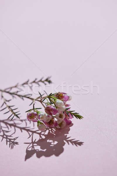 świeże wiosną oddziału różowy kwiaty karty Zdjęcia stock © artjazz