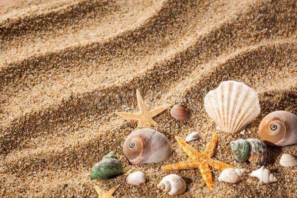 Sea shells on the sand Stock photo © artjazz
