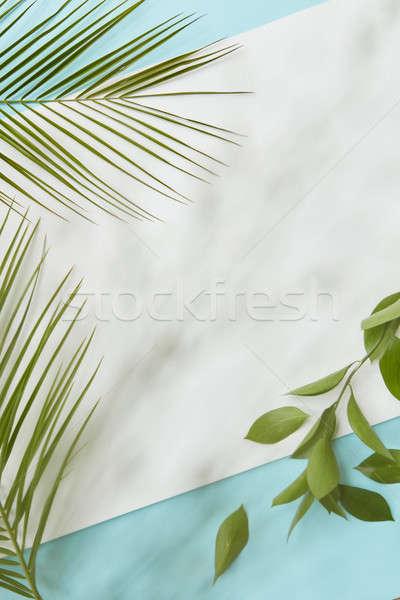 Postal decorado hojas palma hojas verdes Foto stock © artjazz