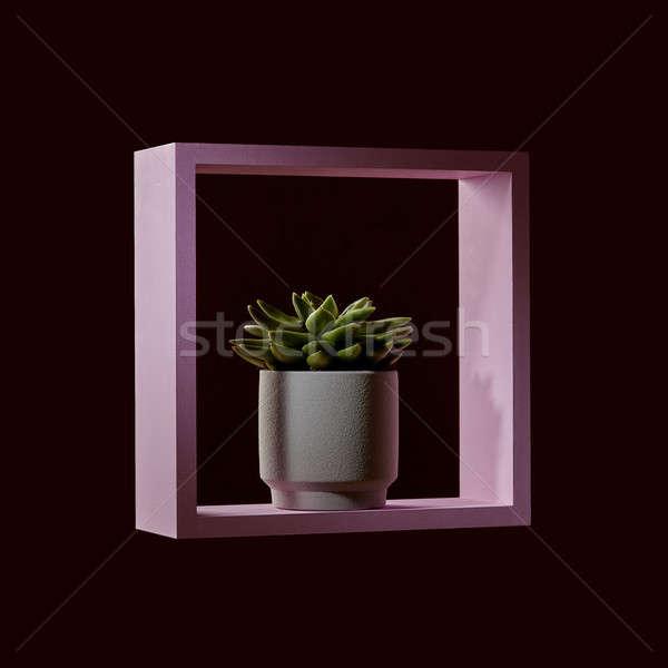 Сток-фото: завода · цветочный · горшок · розовый · кадр · темно · белый
