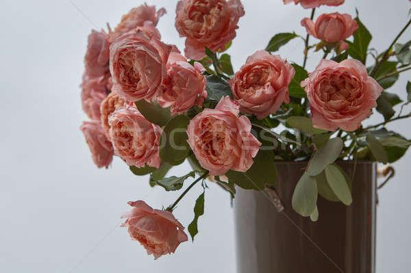 Vaso grande bouquet rosa rose grigio Foto d'archivio © artjazz