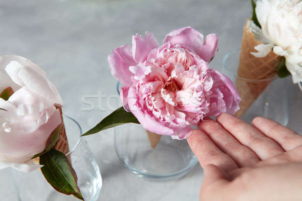 Womans hand hold an elegant pink peony flower with waffle cups a Stock photo © artjazz