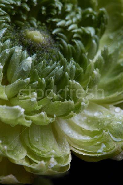 Fotó részlet virág vízcseppek zöld gerezd Stock fotó © artjazz