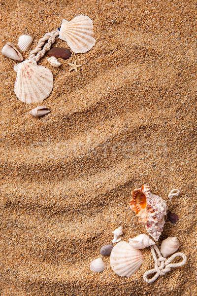 frame from various shells on sand Stock photo © artjazz