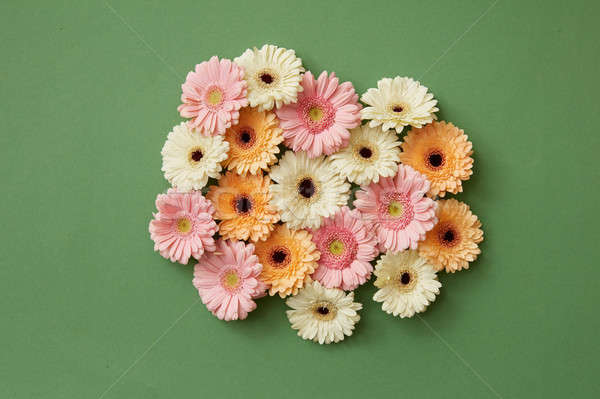 Gerbera flowers on a green paper background. Stock photo © artjazz