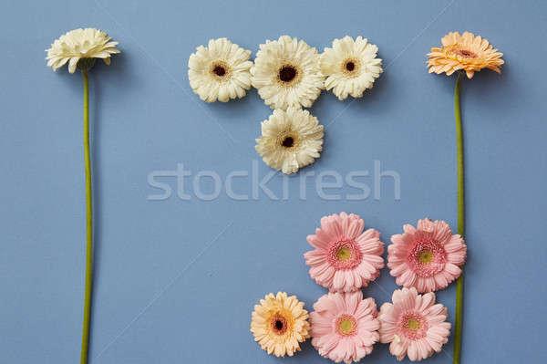 Juego diferente azul papel flor de primavera flor Foto stock © artjazz