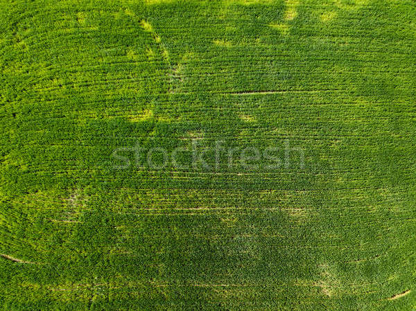Aerial view green field in the countryside. Photo from the drone Stock photo © artjazz