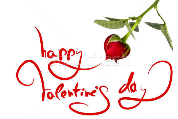 greetings for valentine's day and heart from rose isolated on white Stock photo © artjazz