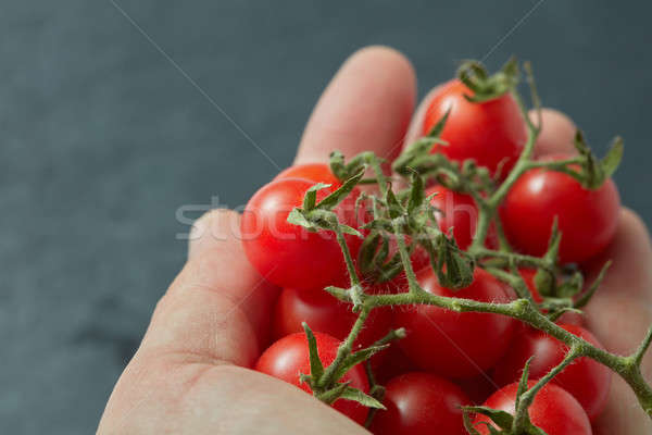 Red cherry tomatoes in a man's hand Stock photo © artjazz