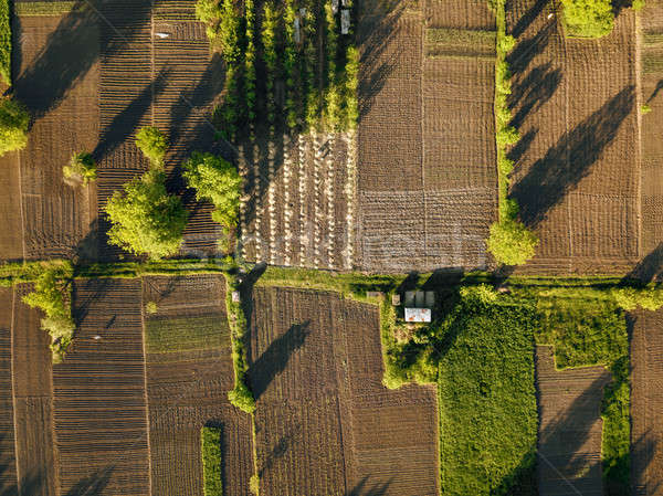 aerial view agriculture field summer day Stock photo © artjazz