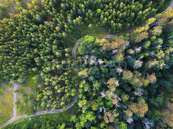 Aerial view from the drone of road through the forest in the summer. Stock photo © artjazz