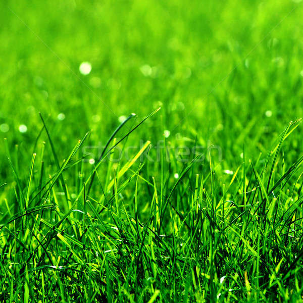 green grass background Stock photo © artjazz
