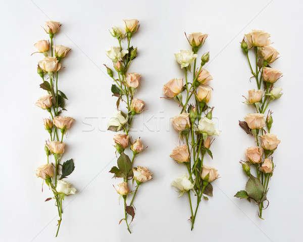 Stockfoto: Bloemen · witte · Geel · rozen · vier · apart
