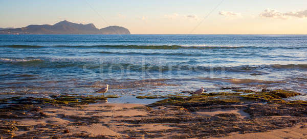 Sunset by the sea with gulls Stock photo © artjazz