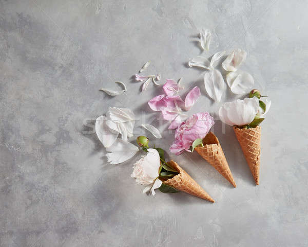 Stock fotó: Tavaszi · virágok · minta · rózsaszín · fehér · szirmok · szürke