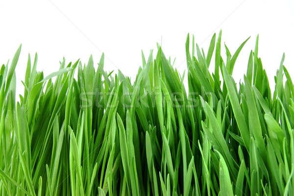 Zielona trawa odizolowany biały szczęśliwy liści Zdjęcia stock © artjazz