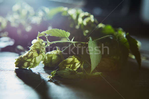 Stock photo: Fresh branches and cones of green hop