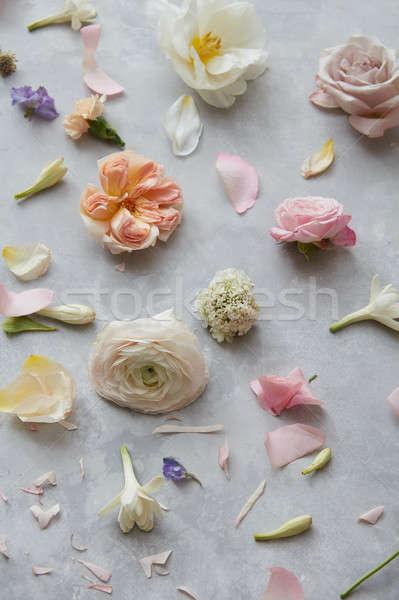 Multicolor flower background Stock photo © artjazz