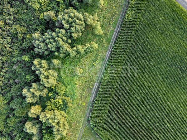 Sucia carretera agrícola campo verde Foto stock © artjazz