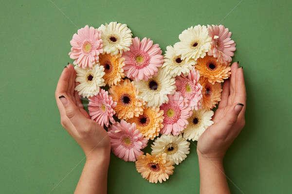 Hands of girl holding a heart of gerbera flowers Stock photo © artjazz