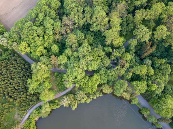 Top view of a green forest with trails and a lake Stock photo © artjazz
